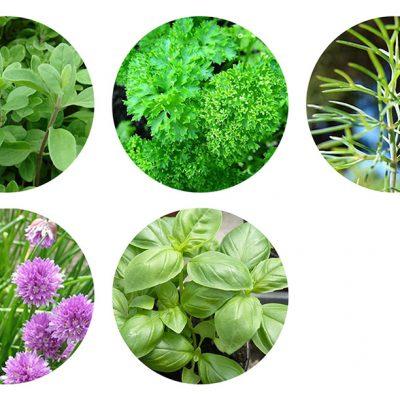 herb 3